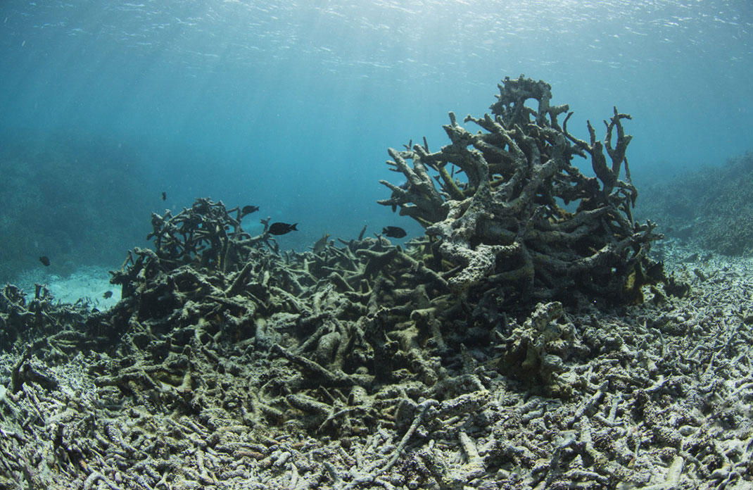 2-coraux-mer