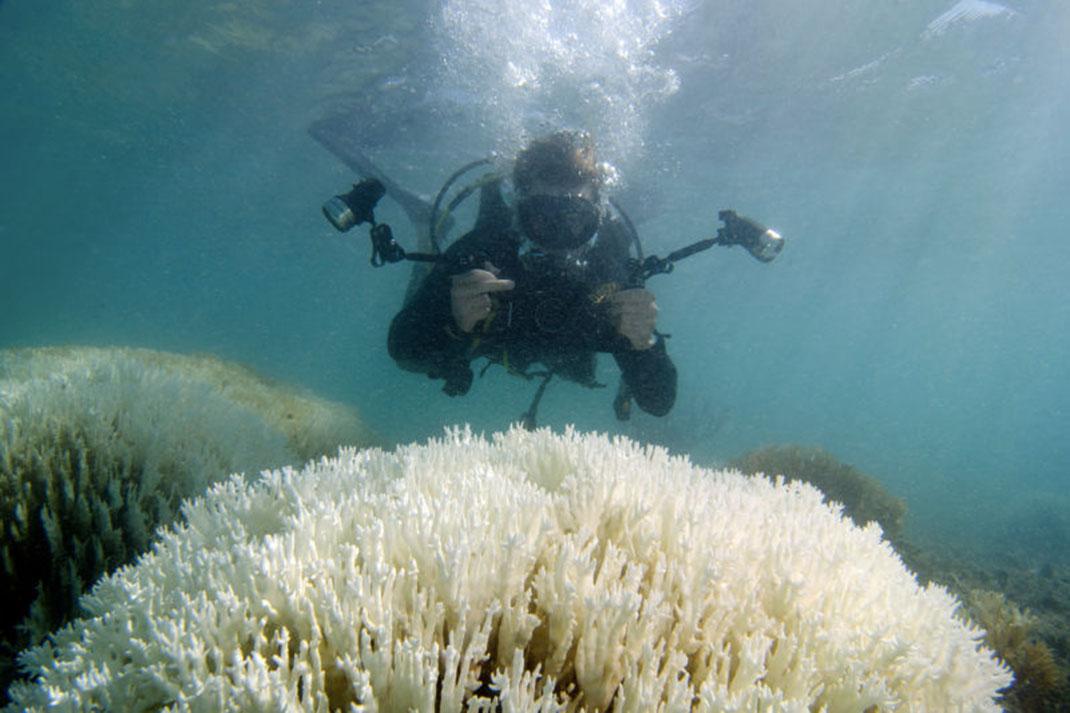 corail-extinction-8