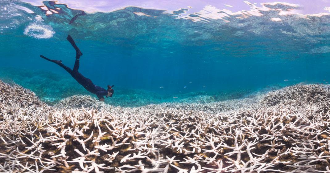 une-coraux-mer