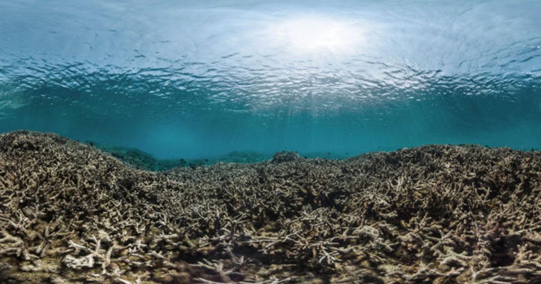 une-coraux-mort1